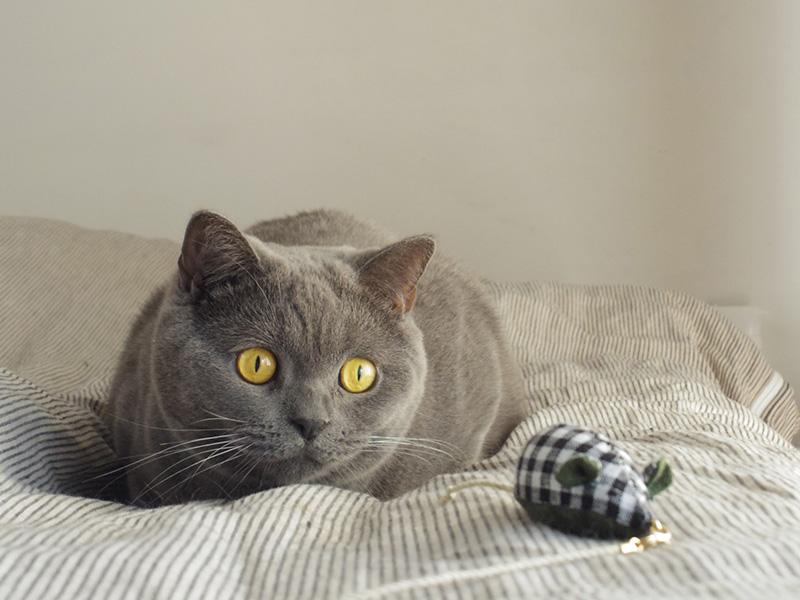 猫 喜ぶ おもちゃ 手作り
