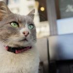 イスタンブール流 ねこ観が新鮮『猫が教えてくれたこと』/銀幕のねこたち#03