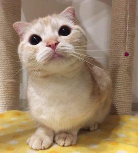 猫にも人間にもとても丁寧にご対応いただきました。やはり直接お話できることの安心感や重要性を感じることができました。何より、獣医師さんが猫が好きな方なんだなと、お話ししてて楽しかったです(ぽてち)