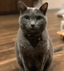 猫の負担を考えて健診を控えてきましたが、高齢になり今後どうしようかと考えていたところでした。定期的に健康の状態をモニターしてくださりかつ気軽に相談できると言う体制はすばらしいと思います(あんず)