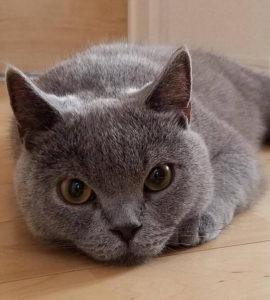 外出時の猫のストレスを軽減できることが良かったです。また、自宅の環境を見ながらアドバイスをいただけたことが参考になりました(だい)
